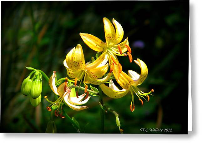 Tammy Wallace Greeting Cards - Tiger Lily Greeting Card by Tammy Wallace
