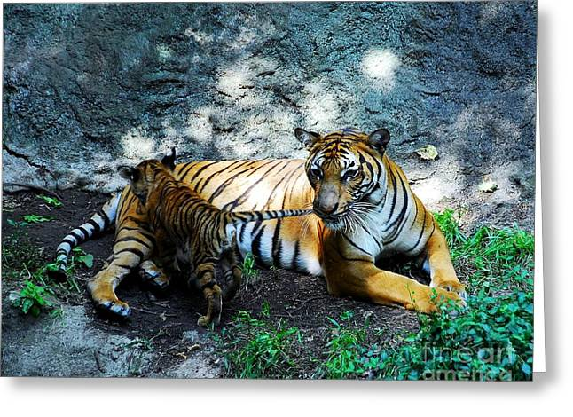 The Tiger Greeting Cards - Tiger Love 1 Greeting Card by Mel Steinhauer