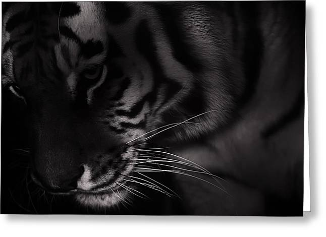 Tiger Monochrome Greeting Card by Martin Newman