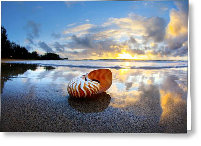 Beach Pictures Greeting Cards - Tiger Nautilus Sunrise Greeting Card by Sean Davey