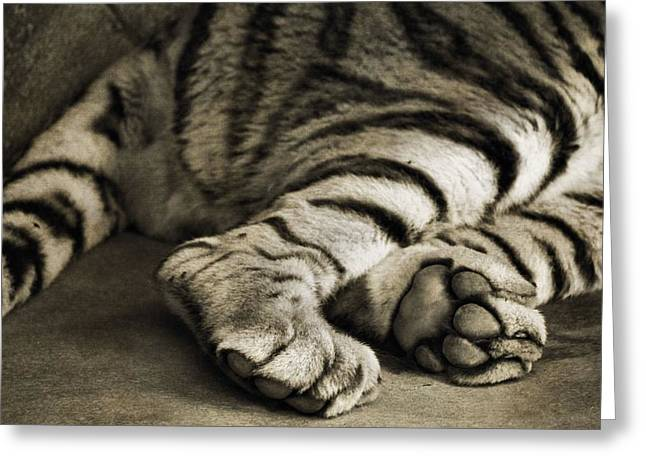 Large Cats Greeting Cards - Tiger Paws Greeting Card by Dan Sproul