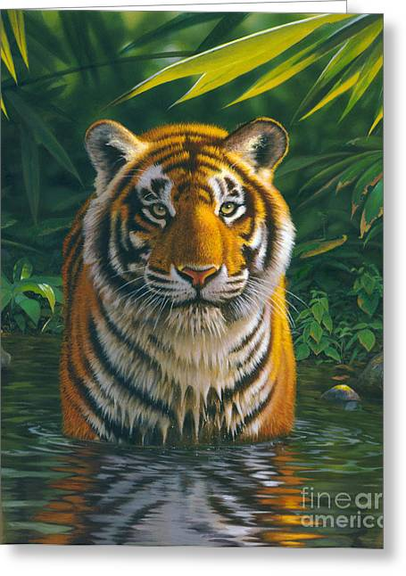 Tropical Wildlife Greeting Cards - Tiger Pool Greeting Card by MGL Studio - Chris Hiett