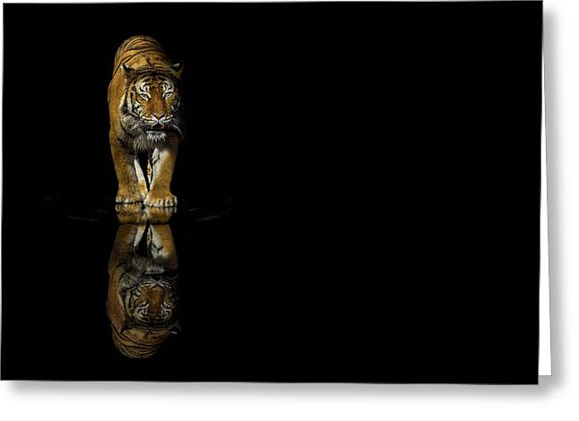 Reflex Greeting Cards - Tiger Reflections - Big Cat - Predator Greeting Card by Jason Politte