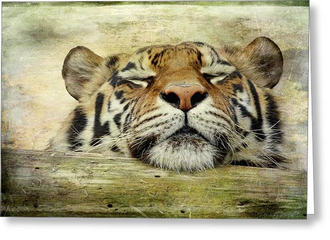 Recently Sold -  - Bobcats Greeting Cards - Tiger Snooze Greeting Card by Athena Mckinzie