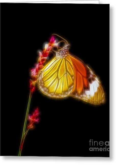 Danaus Genutia Greeting Cards - Tiger striped butterfly fractal art Greeting Card by Image World