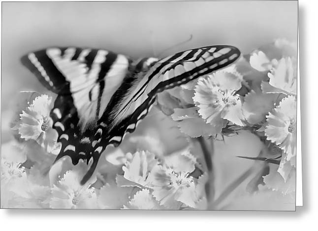 Tiger Swallowtail Greeting Cards - Tiger Swallowtail Butterfly Monochrome Greeting Card by Jennie Marie Schell