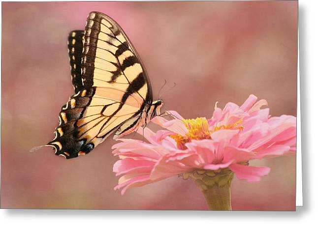 Kim Photographs Greeting Cards - Tiger Swallowtail in the Pink Greeting Card by Kim Hojnacki