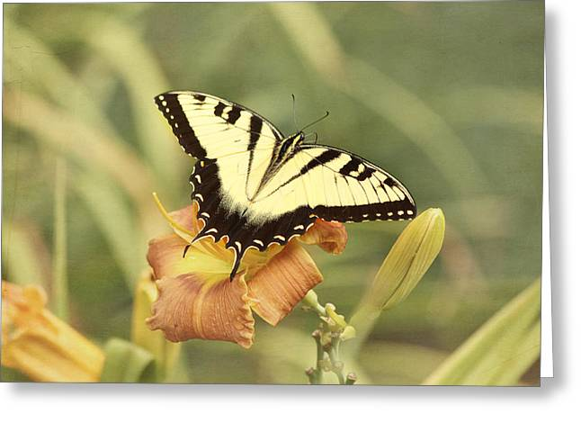 Day Lily Greeting Cards - Tiger Swallowtail Greeting Card by Kim Hojnacki