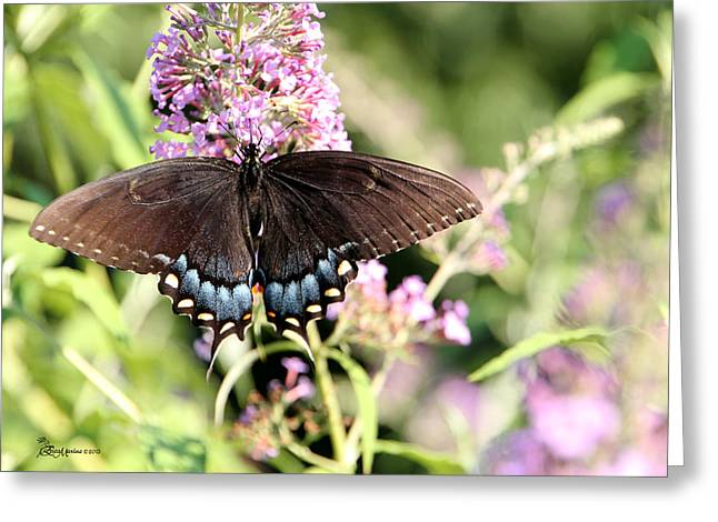 Tiger Swallowtail Digital Art Greeting Cards - TIGER SWALLOWTAIL on Butterfly Bush-Female - Featured in Wildlife and Nature Groups Greeting Card by EricaMaxine  Price