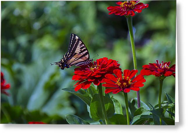Red Tiger Greeting Cards - Tiger Tail In Meadow Greeting Card by Garry Gay