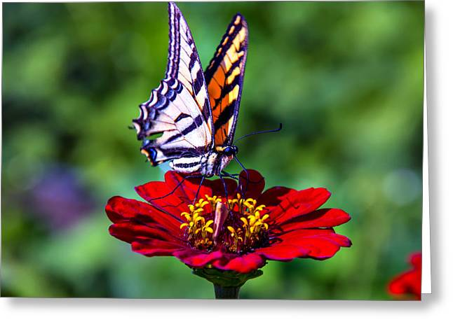 Red Bouquet Greeting Cards - Tiger Tail On Red Flower Greeting Card by Garry Gay