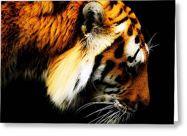 Gaze Mixed Media Greeting Cards - Tiger  thinking Greeting Card by Toppart Sweden