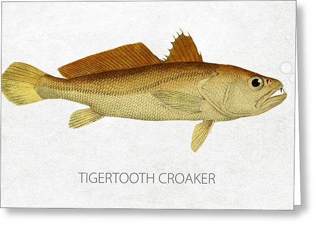 Aquarium Fish Digital Greeting Cards - Tigertooth croaker Greeting Card by Aged Pixel
