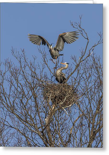 Birds In A Nest Greeting Cards - Tight Fit Greeting Card by Thomas Young