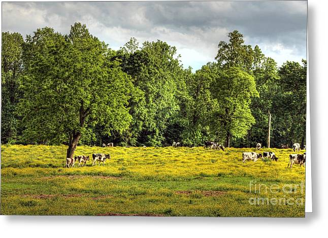 Till the Cows Come Home Greeting Card by Benanne Stiens