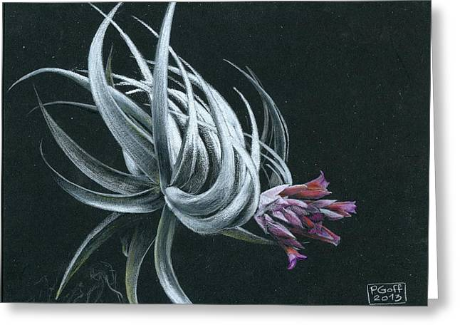Bromeliad Paintings Greeting Cards - Tillandsia piauiensis Greeting Card by Penrith Goff