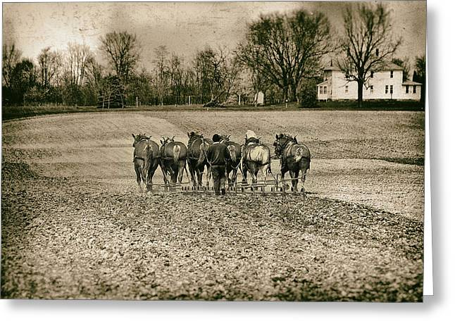 Amish Community Greeting Cards - Tilling the Fields Greeting Card by Tom Mc Nemar