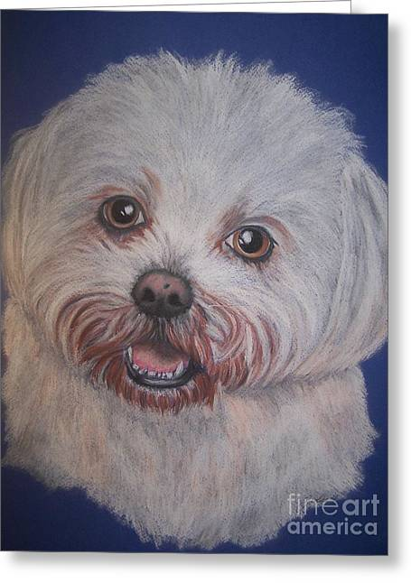 Maltese Drawings Greeting Cards - Tilly Greeting Card by Julie Hull