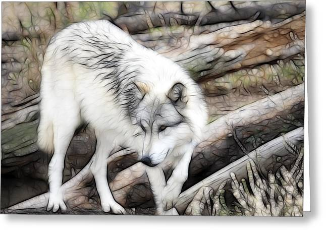 Preditor Greeting Cards - Timber Wolf Greeting Card by Steve McKinzie