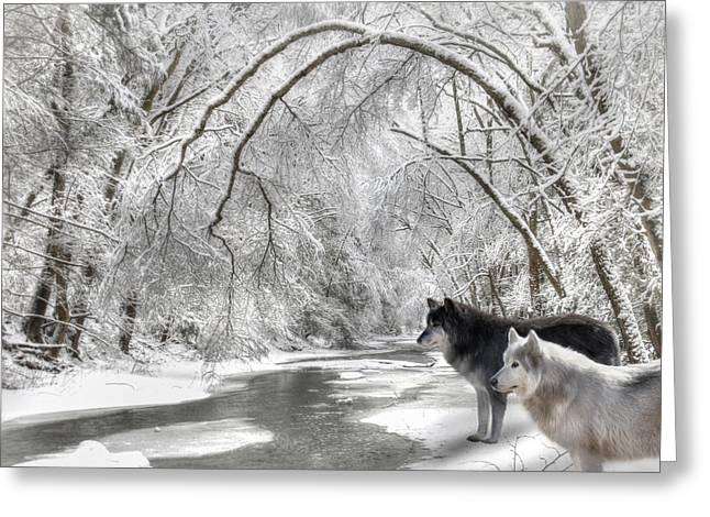 Wolf Creek Greeting Cards - Timber Wolves Greeting Card by Lori Deiter