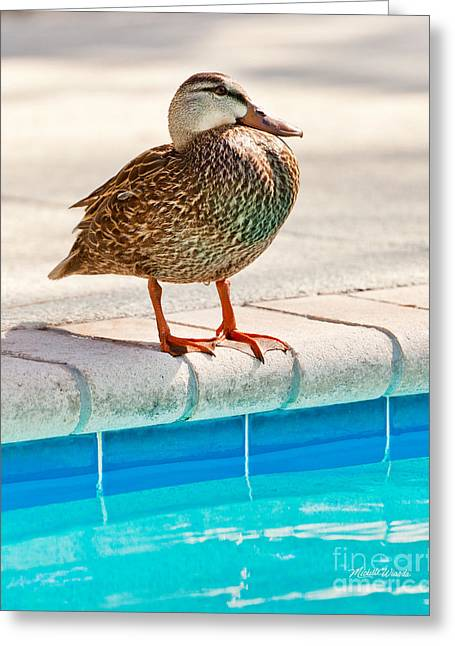 Pool Deck Greeting Cards - Time For a Dip II Greeting Card by Michelle Wiarda