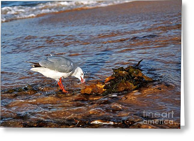 Aquatic Bird Greeting Cards - Time for a Drink Greeting Card by Kaye Menner