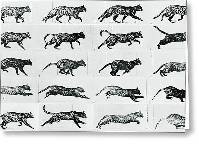 Leopard Running Greeting Cards - Time Lapse Motion Study Cat Monochrome  Greeting Card by Tony Rubino