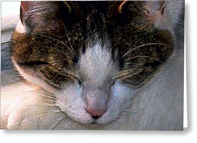 Photos Of Cats Digital Greeting Cards - Time Out Greeting Card by Dale   Ford