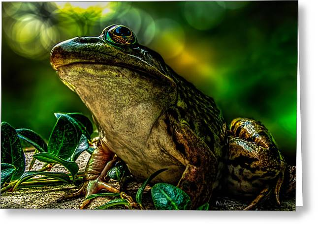 Princes Greeting Cards - Time Spent With The Frog Greeting Card by Bob Orsillo