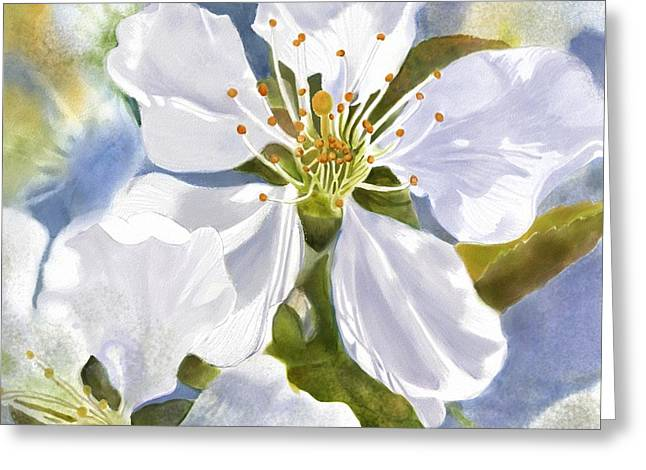 Joan A Hamilton Greeting Cards - Time To Blossom Greeting Card by Joan A Hamilton