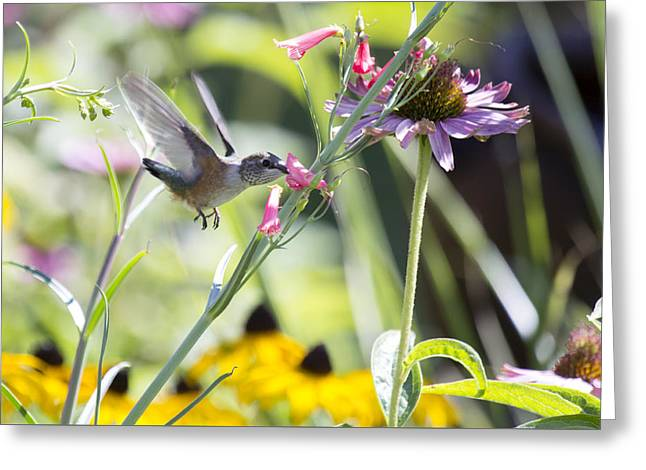 Time To Fly Greeting Card by Dana Moyer