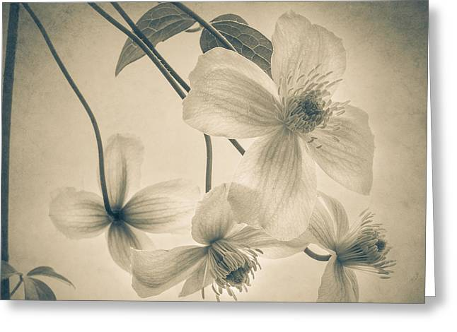 Artistic Photography Greeting Cards - Timeless Greeting Card by Constance Fein Harding