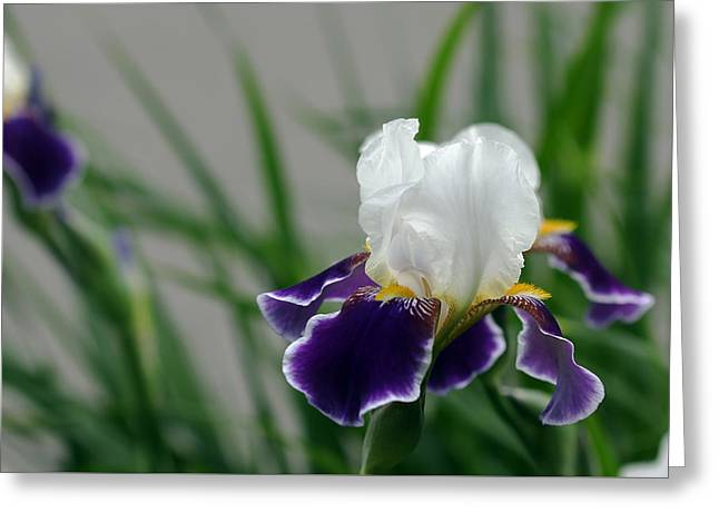 Eloquence Greeting Cards - Timeless Eloquence Greeting Card by Debbie Oppermann