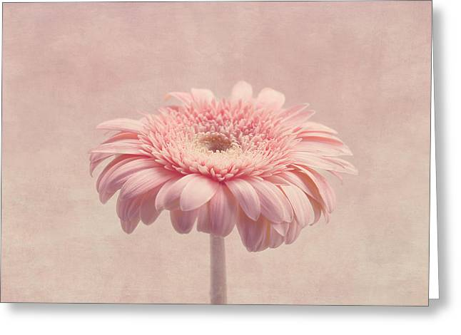 Textured Floral Greeting Cards - Timeless Greeting Card by Kim Hojnacki