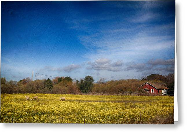 Mustard Greeting Cards - Times Like These Greeting Card by Laurie Search