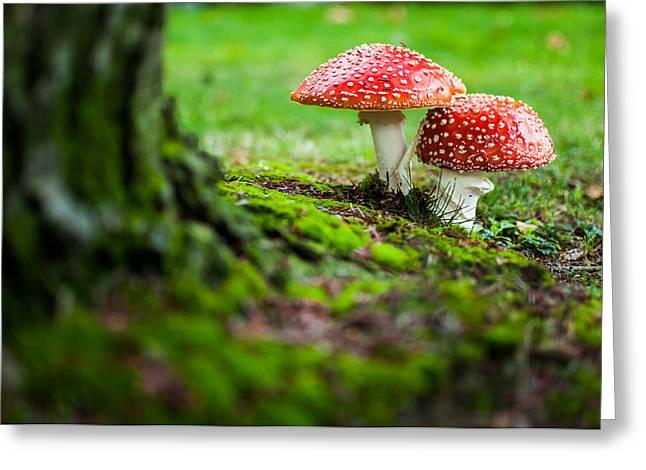 Fungi Pyrography Greeting Cards - Timid mushrooms Greeting Card by Luca Roveda