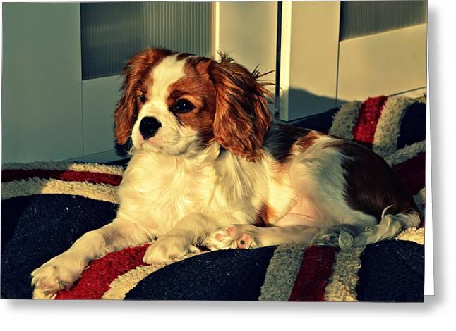 Bright Art Of Dogs Greeting Cards - Timothy Greeting Card by Cyryn Fyrcyd