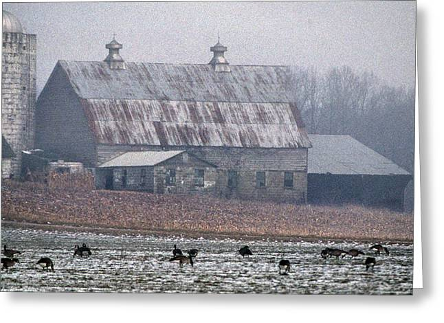 Winter Wheat Greeting Cards - Tin Roof Greeting Card by Skip Willits