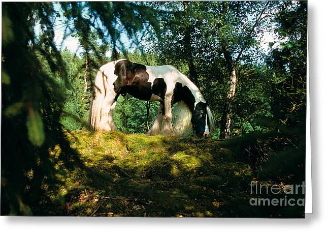 Gypsy Cob Greeting Cards - Tinker Horse Greeting Card by Gabriele Boiselle