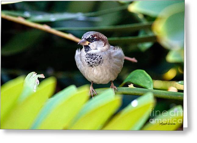 Hanging Out Greeting Cards - Tiny Bird Hanging Out - People Watcher Greeting Card by Michelle Wiarda