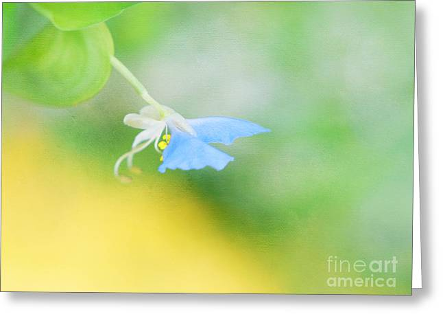 Art And Healing Greeting Cards - Tiny Butterfly Greeting Card by Irina Wardas