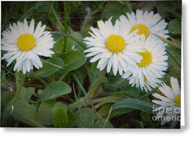 Aster Mixed Media Greeting Cards - Tiny Daisies Greeting Card by Chalet Roome-Rigdon