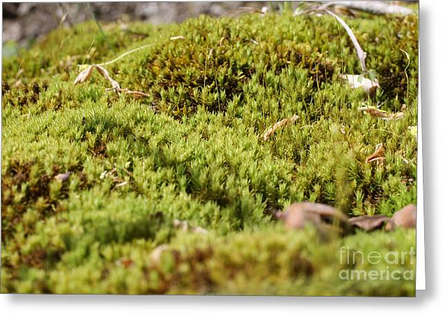 Moss Green Greeting Cards - Tiny Moss Landscape Greeting Card by Adam Long