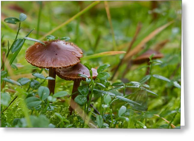 Fungi Greeting Cards - Tiny Mushrooms Greeting Card by Angie Vogel