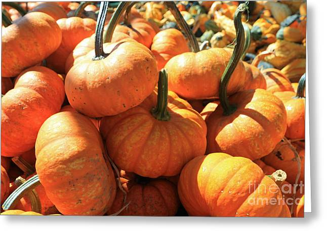 Farm Stand Greeting Cards - Tiny Pumpkins Greeting Card by Mary Haber