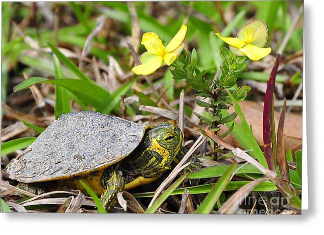 Slider Greeting Cards - Tiny Turtle Close Up Greeting Card by Al Powell Photography USA