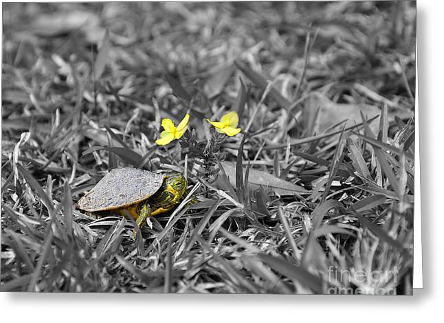 Slider Greeting Cards - Tiny Turtle Selective Color Greeting Card by Al Powell Photography USA