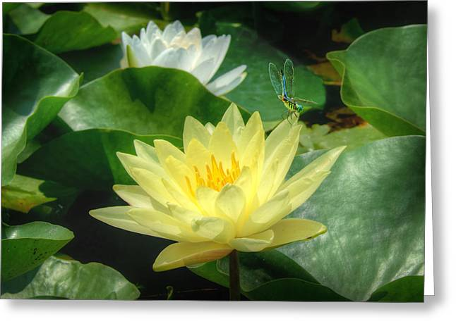 Lilly Pads Greeting Cards - Tiny Visitor Greeting Card by Nikolyn McDonald
