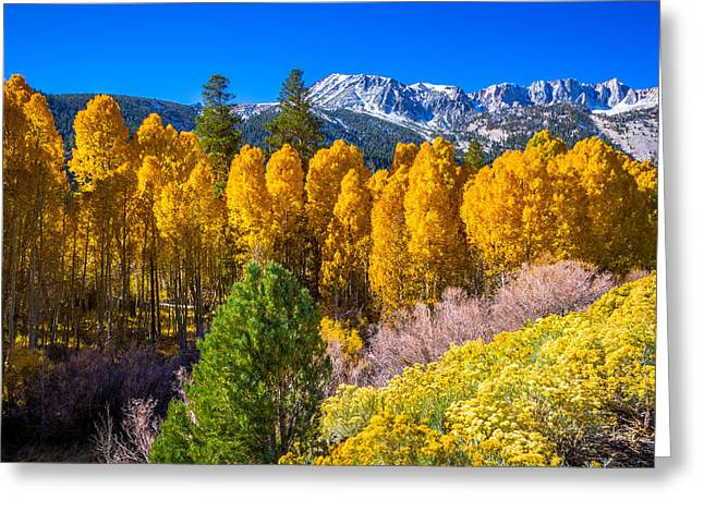 Limited Colors Greeting Cards - Tioga Pass Greeting Card by Scott McGuire