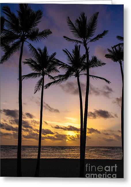 Ocean Art Photography Greeting Cards - Tip of the White Cane Palms Greeting Card by Charles Dobbs